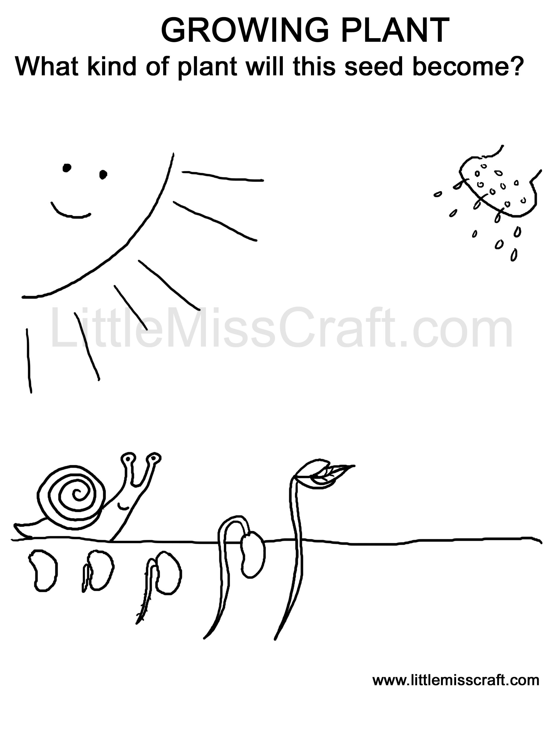 coloring page doodle printable germinating seed grow to plant