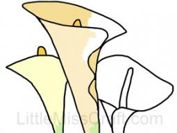 Calla Lily Coloring Page