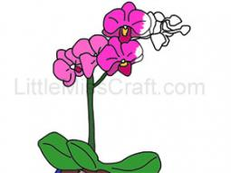 Orchid Plant Coloring Page