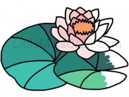 Water Lily Coloring Page 1