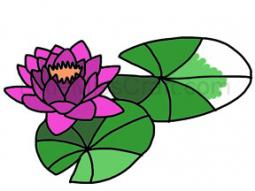 Water Lily Coloring Page 2