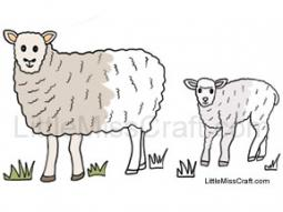 Sheep and Lamb Coloring Page